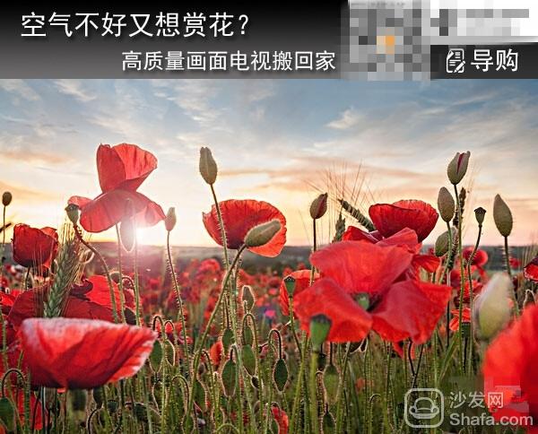 空气不好又想赏花? 高质量画面电视搬回家