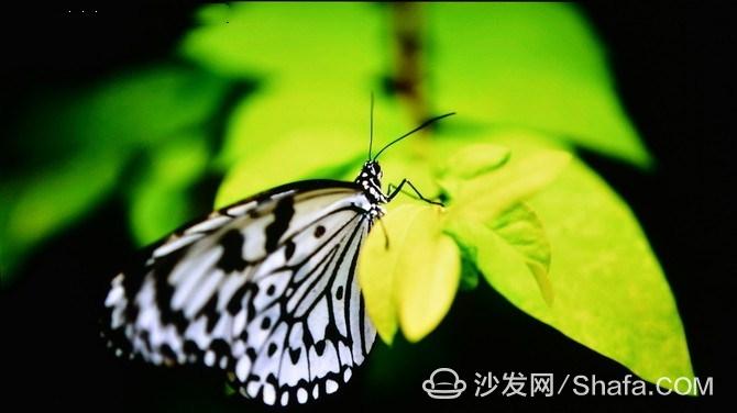 c9dcf17592559895_副本.jpg