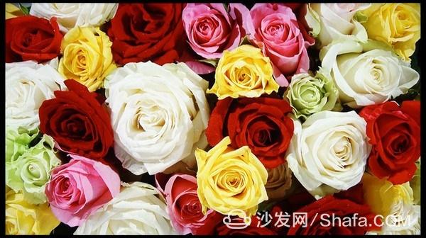 10007304_dsc09950_thumb_副本.jpg