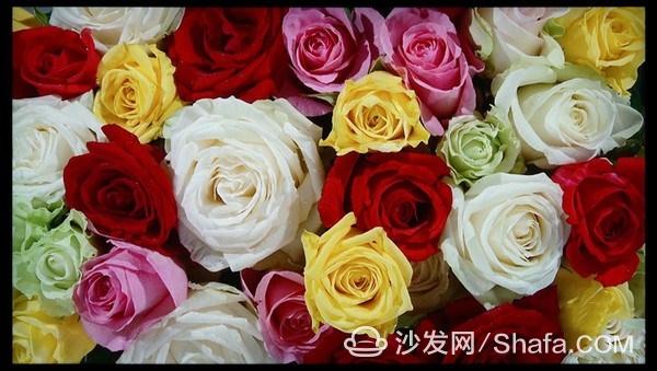 9996064_dsc04148_thumb_副本.jpg