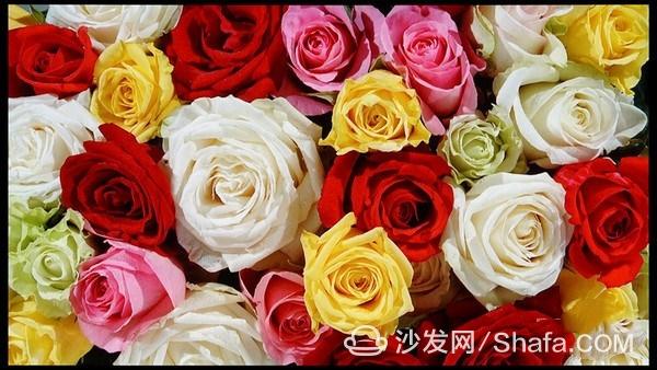 10096086_dsc01110_thumb_副本.jpg
