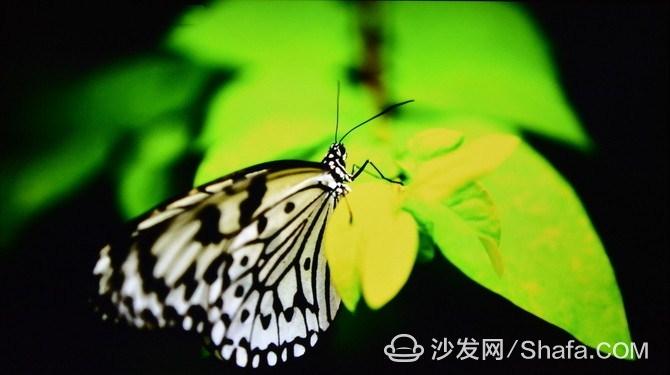 462a2d2f1b7d9bbe_副本.jpg
