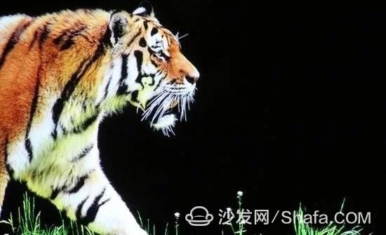 t01253c4620a2af2a49.webp_副本.jpg