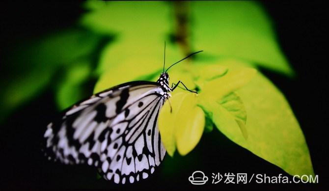 ad9bc4d36aadfd5c_副本.jpg