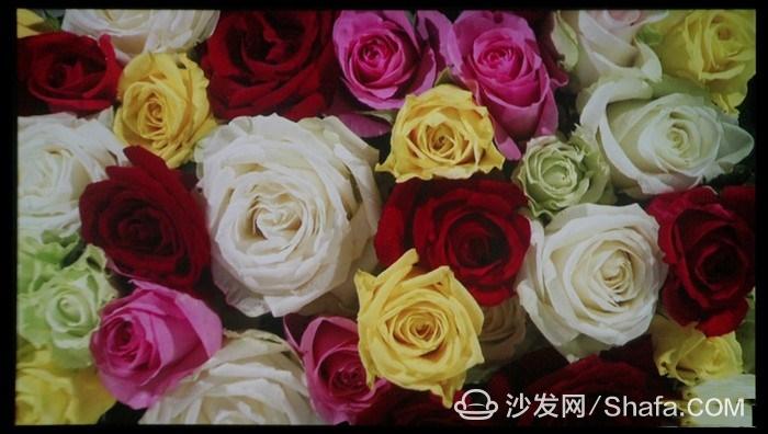11357044_dsc04265_thumb_副本.jpg